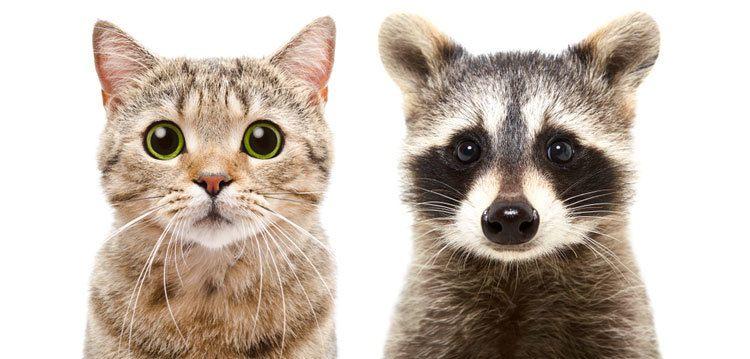 raccoon proof cat feeders