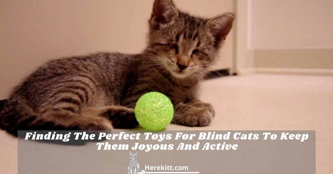toys for blind cats